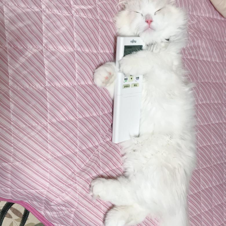 猫とリモコン