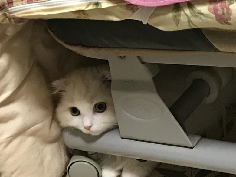 猫 ベット
