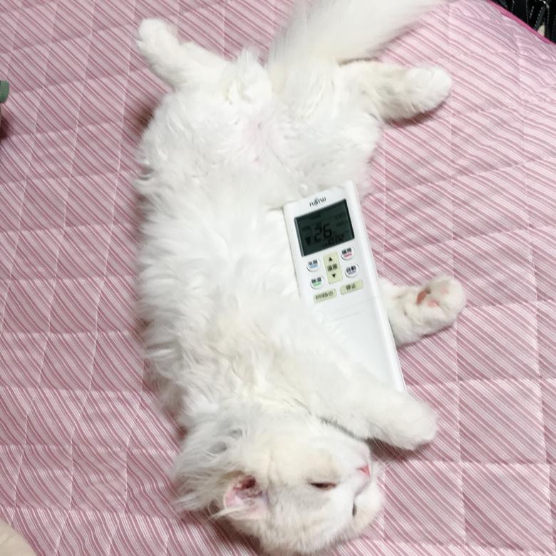 猫 リモコン