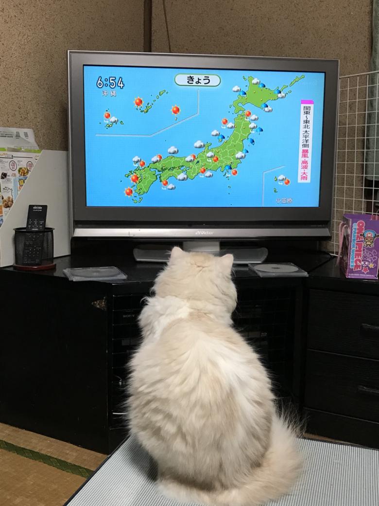 猫 テレビ